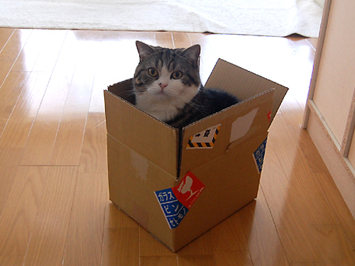 Didn't I tell you that Maru is obssessed with boxes?