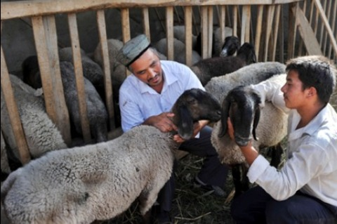 Xinjiang farmers with their Duolang sheeps
