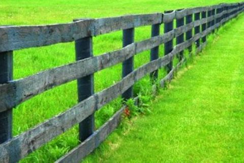Grass is greener on the other side of the fence