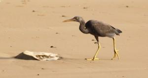 A Bird 090