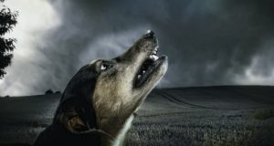 Dog howling at the sky