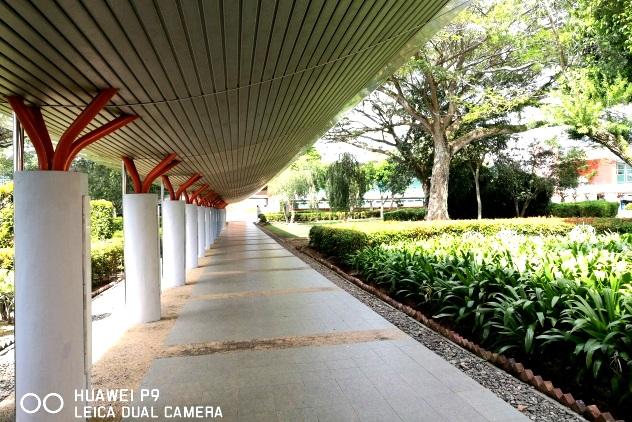 Canopy pathway