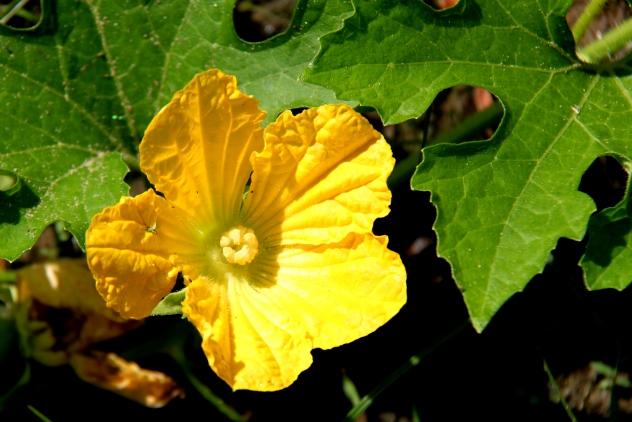 Bersih bloom