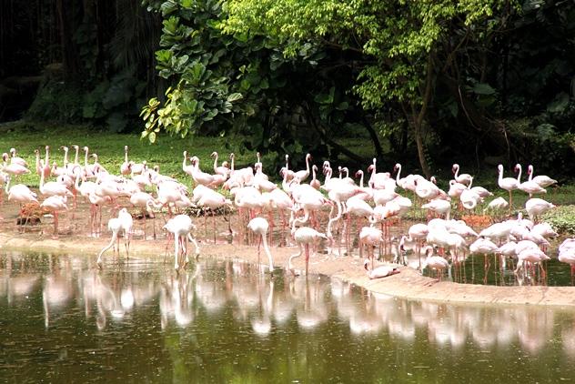 The Flamingo Lake from afar