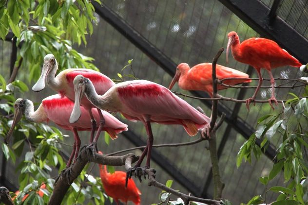 Birds in the Wetlands