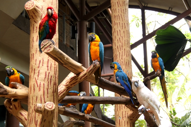 The lovely parrots