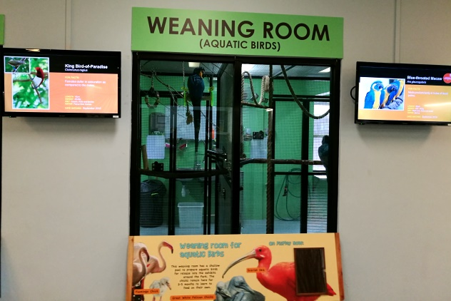 The other weaning room