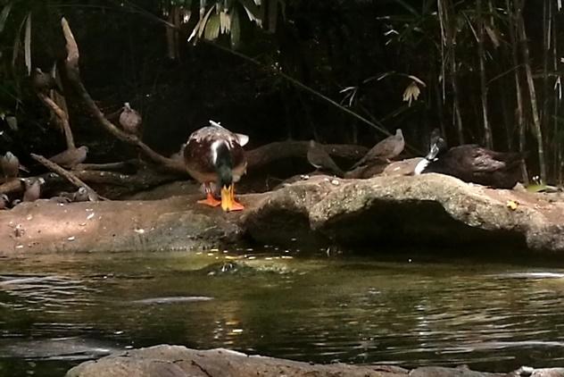 Some birds in the Riverine