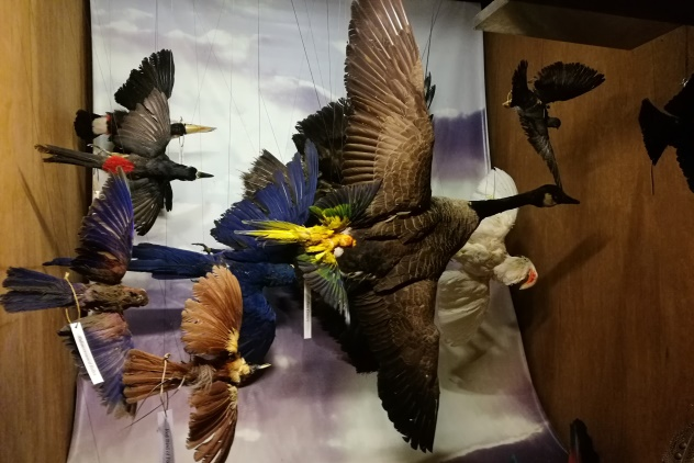 Birds in flight display