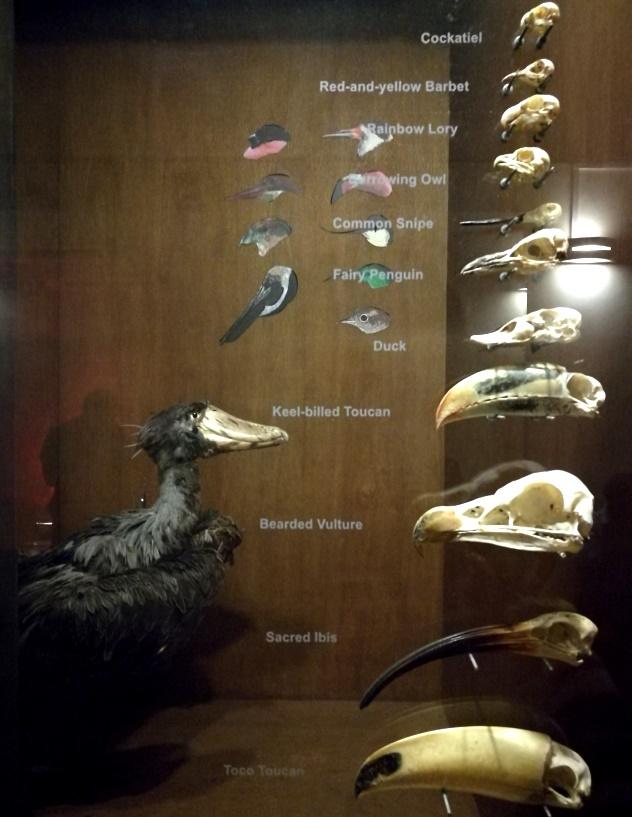 Another avian diorama