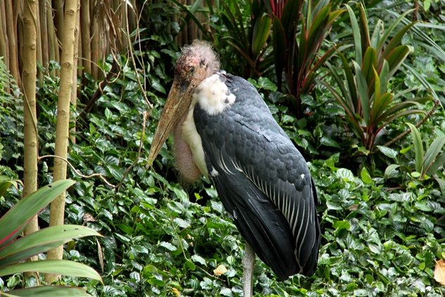 Merabou Stork 2