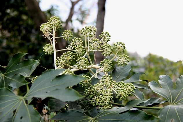 A plant that I saw
