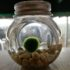 The RM25 Marimo moss ball bought by my sister-in-law