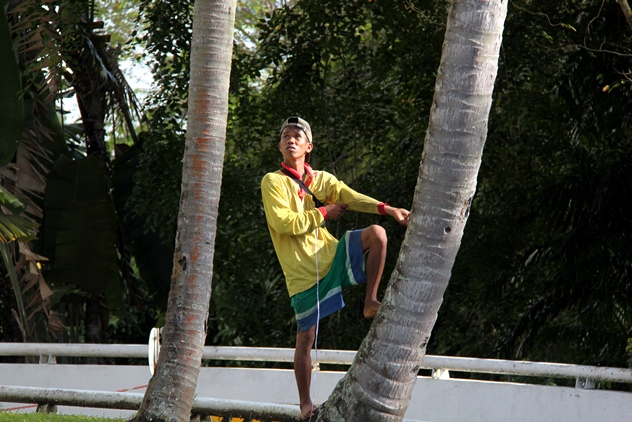 A worker getting ready to climb up a coconut tree