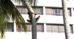 Down the crooked coconut tree